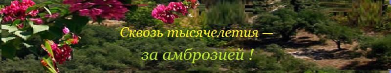 Ромаш Маргарита