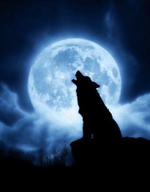 Не пугайте серого волка