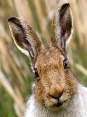 Заяц (про зайца и не только)