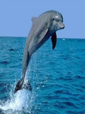 Дельфин в теле