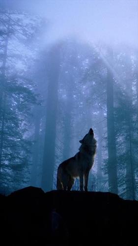 Волк пел свою Песнь