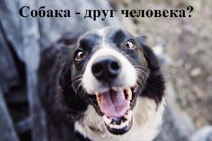 Собака – друг человека?