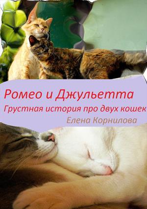 Ромео и Джульетта.Грустная история двух кошек.