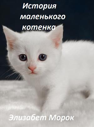 История маленького котенка
