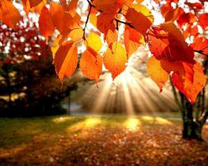 Лики природы: Осень