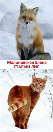 Старый лис