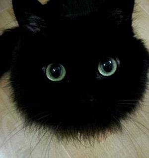 Кошка. Первая осень