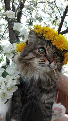 Сказка про Кошку.