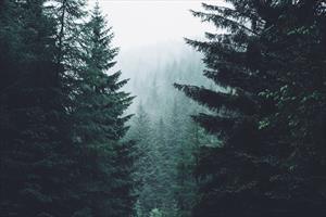Край Северного леса