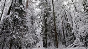 Зимнее божество