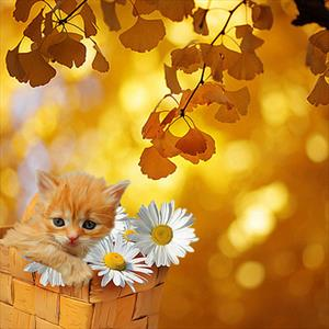 """Маскхалат мой, а-ля «Осень»"""