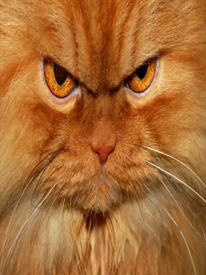 Почему котики-это зло